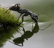 各位,没有看过蚂蚁喝水吧?此片献上