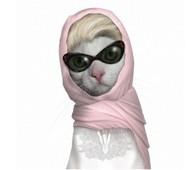 没错,我就是明星,我是大名鼎鼎的猫王,一大天王—有狗仔,你们别老看我。