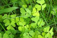 憧憬那片绿,小小植物什么的最有爱了…