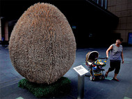 用一次性筷子做成的蛋形雕塑 艺术家的主要意图是想让人们认识到,我们生活的世界就像鸡蛋一样脆弱,以此来鼓励人们环保,不用一次性的木块。