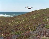 """来自美国波士顿摄影师Daniel Gordon历时五年的摄影项目""""Flying Pictures""""。飞翔对于个人来说看上去是无法做到的事情,但通过摄影,使其成为了可能。捕捉那飞起来的瞬间,Daniel Gordon试图想说,""""飞""""其实是""""存在""""的,带着希望一跃而起,随后重重地摔在地上,悲剧般地结束。"""