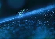 蓝光下精美的蜘蛛,很晶莹的感觉