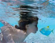 专辑:水下摄影