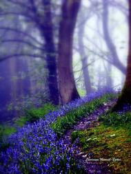 Bluebells in the forest rain by Charmiene Maxwellbatten