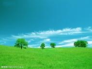 绿色的世界