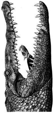 来自插画家:Ricardo Martinez的创意漫画作品。~处境