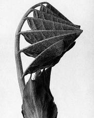 植物黑白照片14