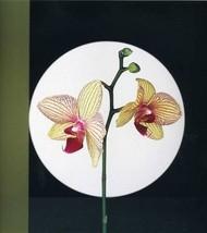 静物摄影: 罗伯特·梅普尔索普的花卉摄影  拼范网 – 人人小站