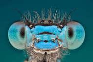 """奥米德说:""""我的相机带我了解到昆虫和蜘蛛神秘不为人知的世界中,让我看到裸眼所不能看到的景象。"""""""