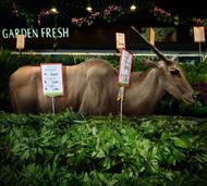 观念摄影:动物大超市  观念摄影:动物大超市