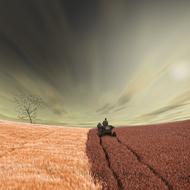照片长方式背部回家IV天空Caras》Ionut鸟云树人孤独小麦家庭粮食去购物车