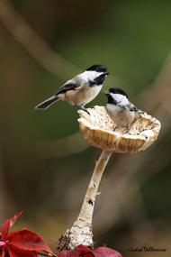 蘑菇上的鸟