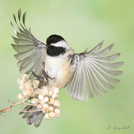 飞行和静止的鸟