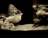 照片他走了莱拉雷蒙德鸟类乌贼莱拉雷蒙德