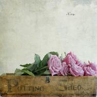 来自Fiona Sami的一组静物摄影,关于花与水果,安静的犹如精灵般的存在
