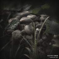 Jürgen Heckel 安静的蘑菇