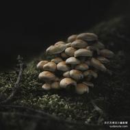 Jürgen Heckel 安静的蘑菇,来自德国摄影师爱好音乐的Jürgen Heckel的一组静物摄影,对象是安静而又存在感弱小的蘑菇。摄影师用黑色环抱这些细小的生灵,画面中透露出孤独与倔强