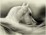 速度与美——奔马
