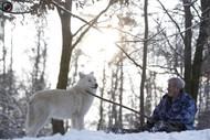 与狼同行,活在狼的世界,你只需要一颗坚强的心。Werner Freund和他的朋友 路透社记者LISI NIESNER9