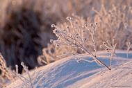 晨霜下的早春2