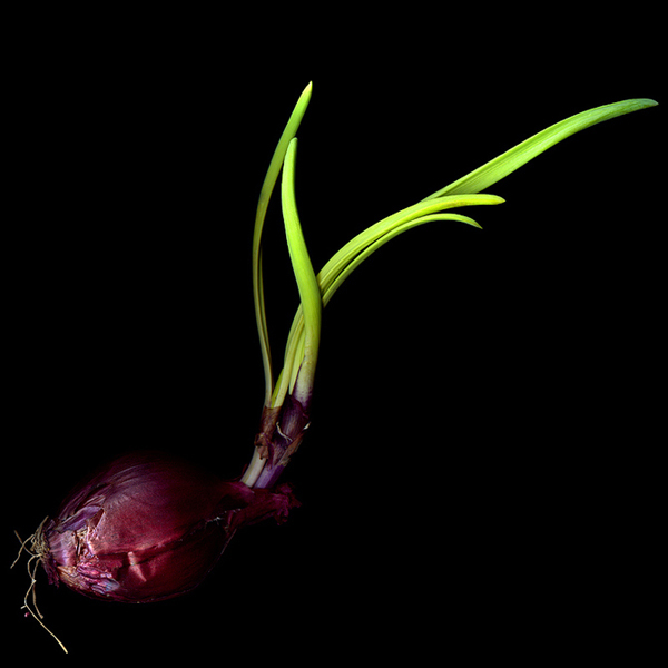 摄影师Magda indigo的蔬菜创意摄影 精致的摄影作品 很让人喜欢. 简单的蔬菜在摄影师镜头下成为了艺术品