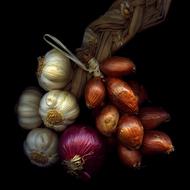 Magda 蔬菜创意摄影