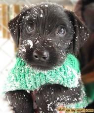 雪中的狗狗好欢乐啊!哈哈