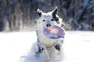 雪中的狗狗好欢乐啊