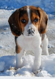 Hilarious and Heartwarming Photos of Dogs in Snow雪中的狗狗好欢乐啊