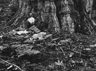 纪实摄影:国家地理10张经典照1915年加利福尼亚,作家吉尔伯特·H·格罗夫纳旅行途中坐在一颗巨杉树下休息。1916年,他提议创办美国国家公园管理局。
