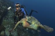 哥斯达黎加科科斯岛,常驻探险家萨拉和绿乌龟一起潜水,探索海洋未遭破坏的净土。(摄影师:Octavio Aburto)  纪实摄影:国家地理10张经典照