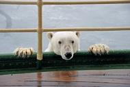 一些温馨搞笑的动物摄影作品