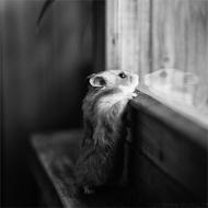 一些温馨的动物摄影作品