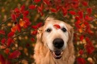 狗狗的幸福生活