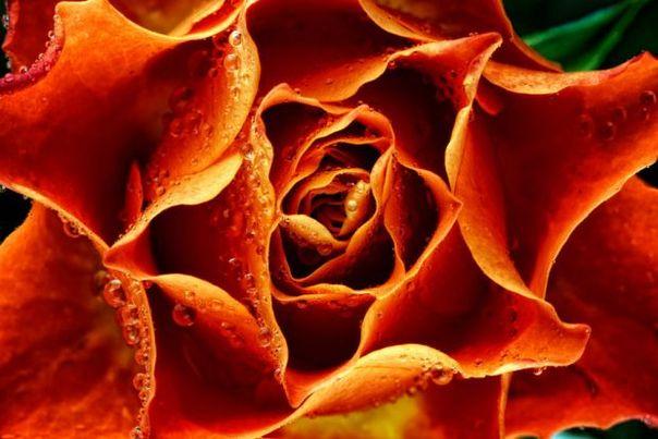 微距下的花卉