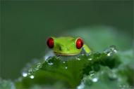 树蛙也卖萌~!我的公主在哪里?@@