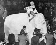 『老照片』Marilyn Monroe at the Madison Square Gardens Circus March 30 1955。