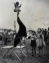 一张老照片,1962年的马戏团表演,图片来自纽约记者资料馆档案。