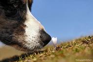 That's How Spring Smells摄影: HansJoachim Brünig