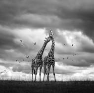 关于爱 ,摄影: Marina Cano
