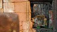 柬埔寨是周边国家中具有超多元素的拍摄地之一。暹粒拥有世界性的遗迹群吴哥Angkor,那些已与自然浑然天成的建筑,或是交错的光影,又或在其间穿梭都很适合拍摄。而残留在遗迹上的花纹、隐藏在角落的雕塑同样等待着你去发掘。乡间的当地人淳朴友善,拥有法国殖民背景也让他拥有多元的文化和美食。