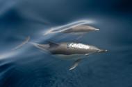 换气中的海豚
