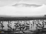 以色列的胡拉湖,无数鸟聚集在一起,景象非常壮观。