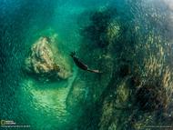 """摄影师介绍说:""""当我在墨西哥卡波圣卢卡斯附近的圣玛丽亚礁拍摄时,发现一只潜鸟在礁石中追赶一大群钓饵鱼。虽然这只鸟的速度很快,但我可以从上方拍到这张照片。"""""""