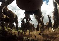 《The Power of the Criollo》,摄影师Chris Schmid