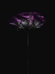 Billy Kidd 干枯的花儿