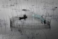 Yann ArthusBertrand摄影作品