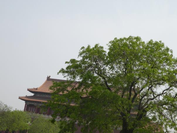 古树后面的城楼