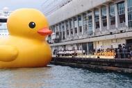 香港的大黄鸭!!哈哈