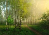 迷雾的清晨 by Дмитрий Алексеев